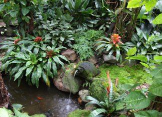 ไอเดียตกแต่งสวนป่า สวนทรอปิคอล ร่มรื่น เย็นสบาย