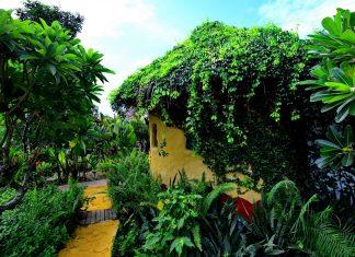 บ้านดินหลังคามุงจาก ปลูกไม้คลุมดินและไม้เลื้อยบนหลังคา ห้องเย็นสบายด้วยผนังดิน